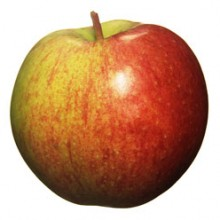 Apple_skola