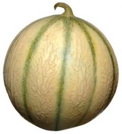 Melon_galia