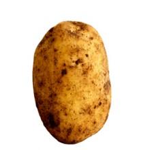 Potatis_skola