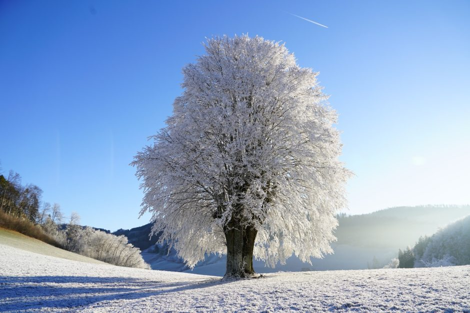 tree-1959267_1920