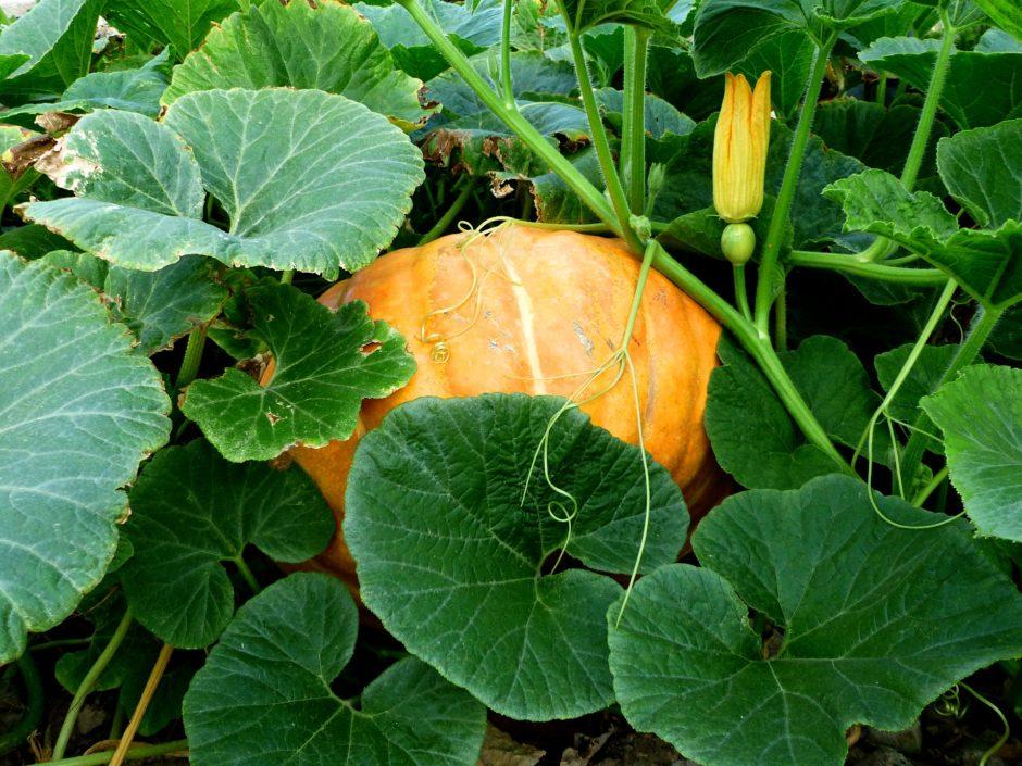 vegetables-4398758_1920