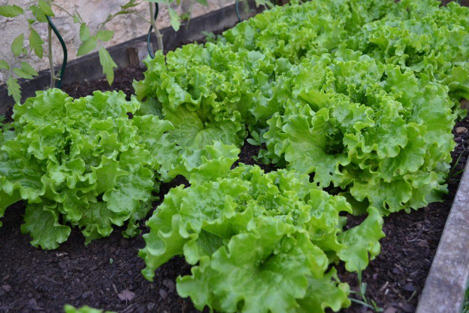 vegetable-garden-1533960_1920