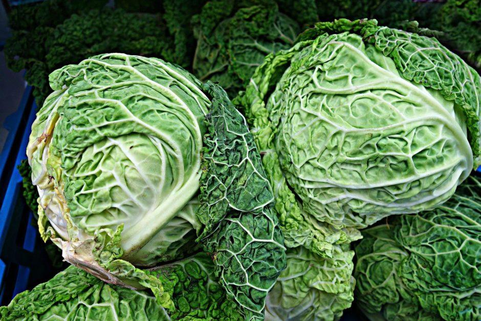 savoy-cabbage-1522811_1920(1)