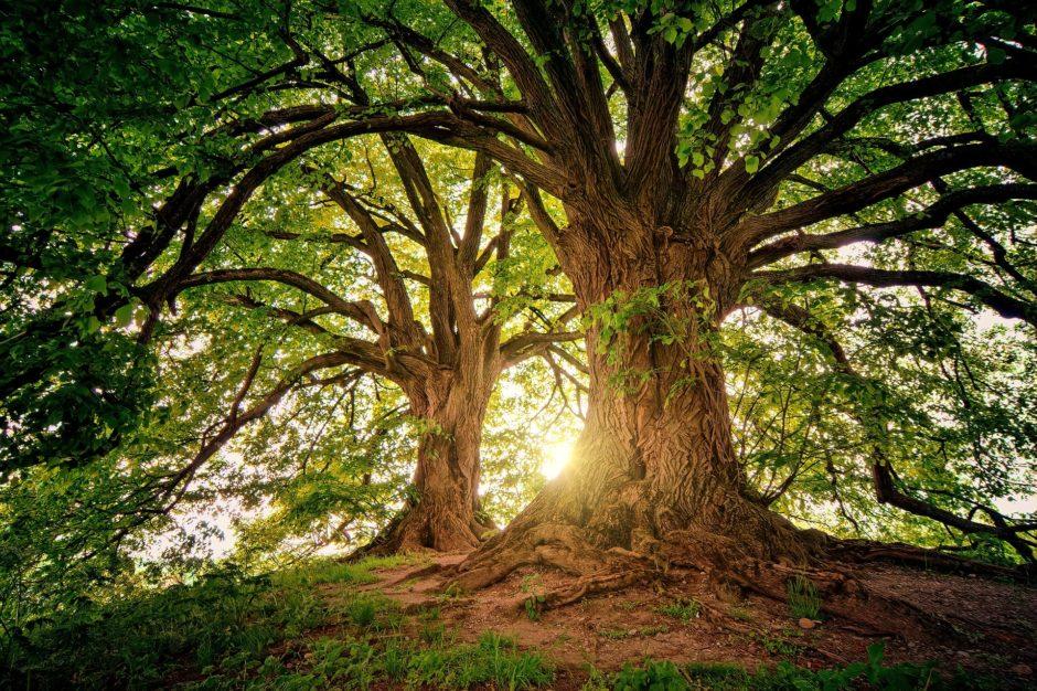 tree-3822149_1920