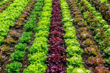 salad-4755777_1920