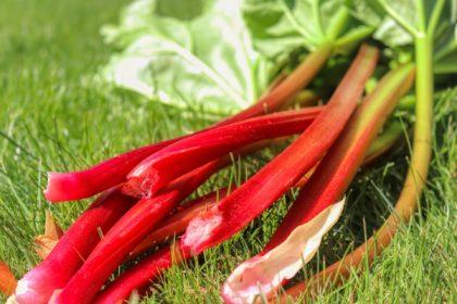 rhubarb-5155214_1920