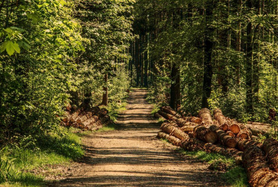trees-3410836_1920