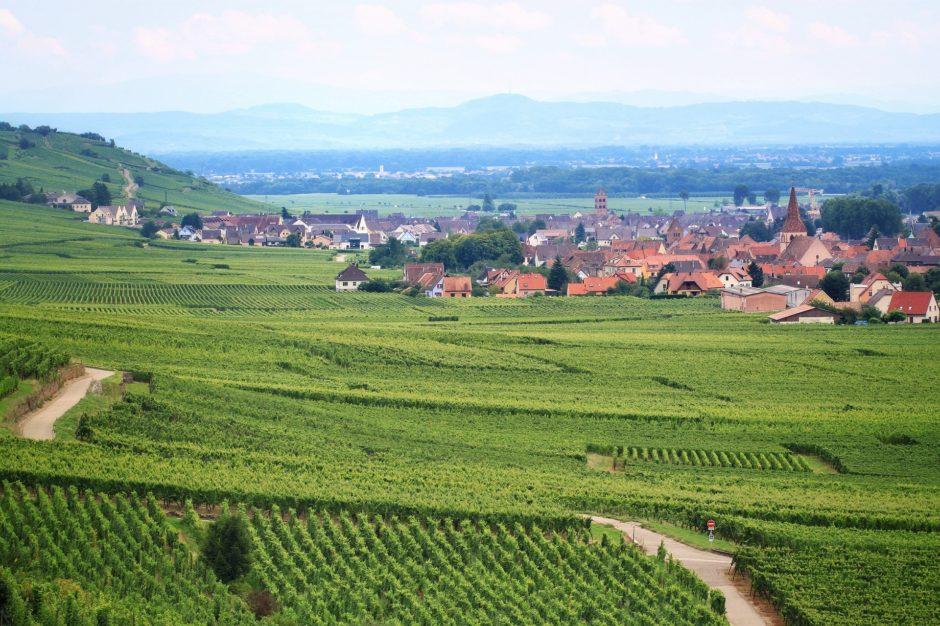 vineyard-762891_1920