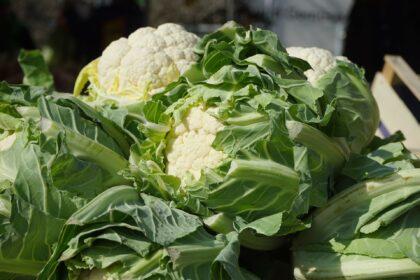 cauliflower-318209_1920