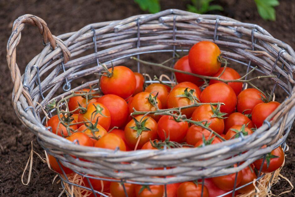 tomatoes-4180020_1920